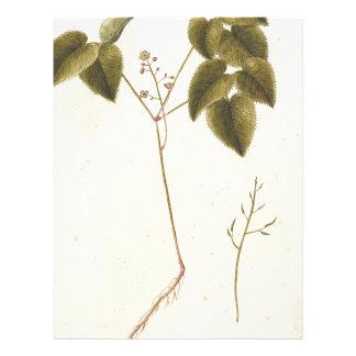 Flower Study - Watercolor Letterhead
