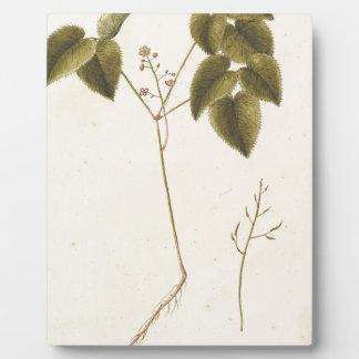 Flower Study - Watercolor Plaque