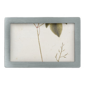 Flower Study - Watercolor Rectangular Belt Buckles