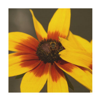 Flower with Hoverfly, Wood Photo Print. Wood Wall Decor