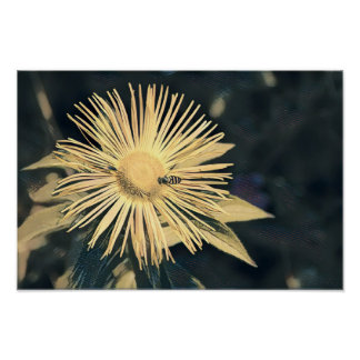 Flower with Wasp Poster/Print Poster