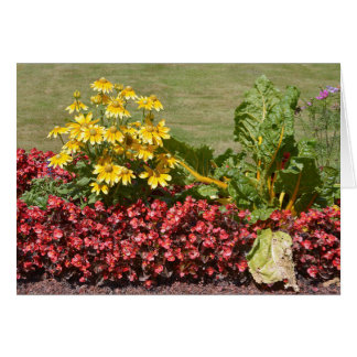 Flowerbed of coneflowers and begonias card