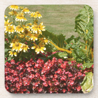 Flowerbed of coneflowers and begonias coaster