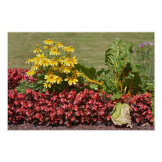 Flowerbed of coneflowers and begonias poster