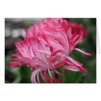 Flowering anemone card