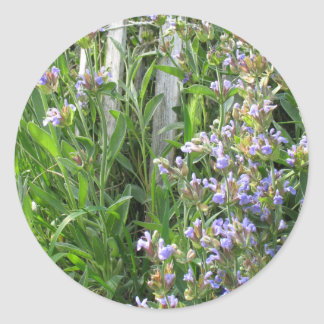 Flowering Blue Sage Herb Sticker