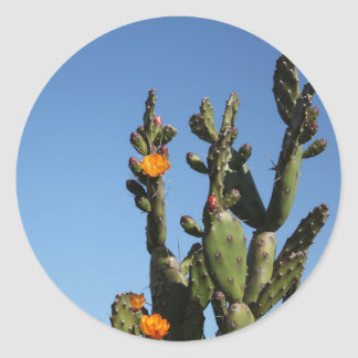Flowering Cactus prickly pear Opuntia Sticker