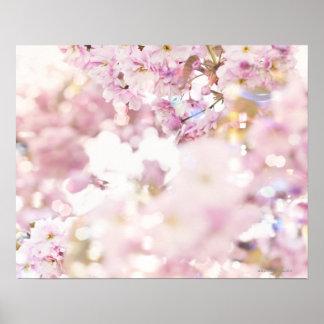 Flowering cherry (Prunus serrulata), close up Poster