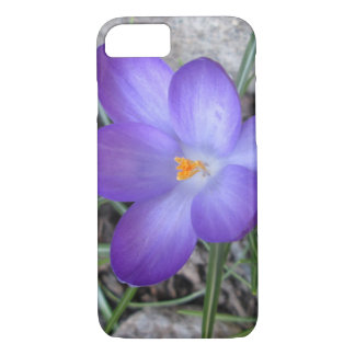 Flowering Crocus Garden Plant iPhone 7 Case