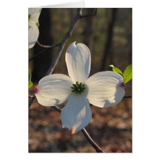 Flowering Dogwood - Customized2 Card