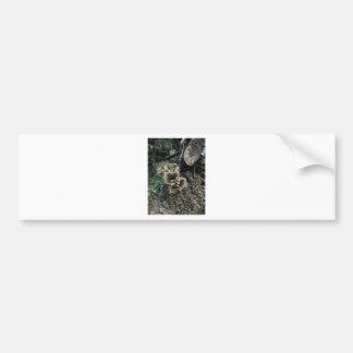 Flowering Mushrooms Bumper Sticker