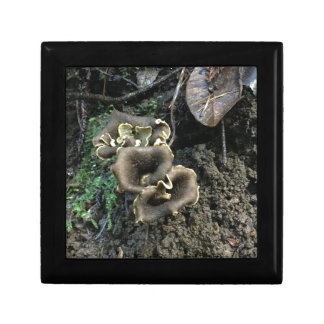 Flowering Mushrooms Gift Boxes
