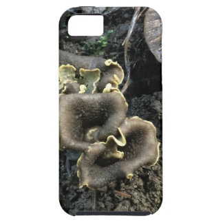 Flowering Mushrooms iPhone 5 Cases