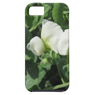 Flowering peas plant in a field . Tuscany, Italy Case For The iPhone 5