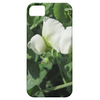 Flowering peas plant in a field . Tuscany, Italy iPhone 5 Cases