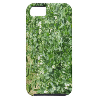 Flowering peas plant in a field . Tuscany, Italy iPhone 5 Cover