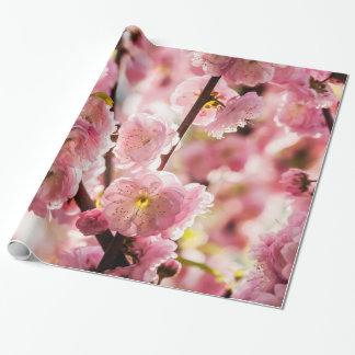 Flowering Plum - Pink Paradize
