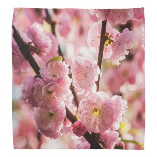 Flowering Plum - Pink Paradize Bandana