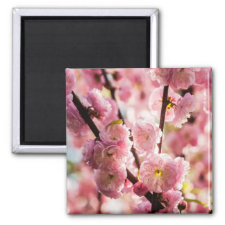 Flowering Plum - Pink Paradize Square Magnet