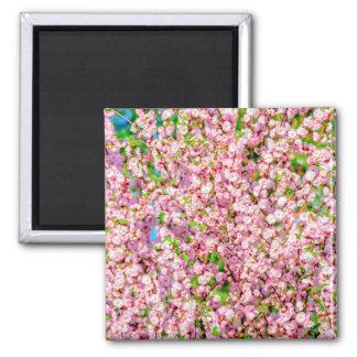 Flowering Plum Square Magnet