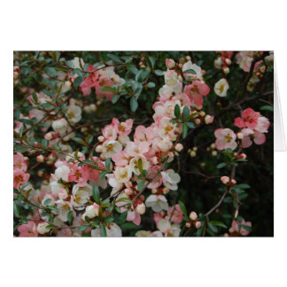 Flowering Quince - Central Park Card