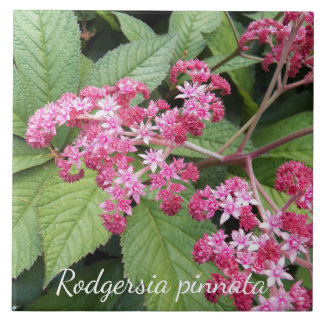 Flowering Rodgersia Floral Ceramic Tiles