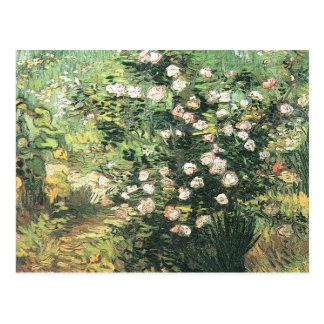 Flowering Rosebush by Vincent van Gogh Postcard