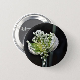 Flowering Spring Onion 2 Inch Round Button