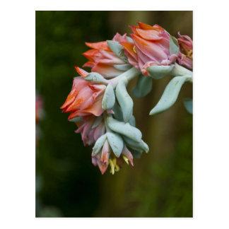 Flowering Succulent Postcard