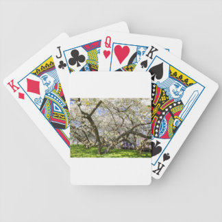 Flowering trees with white blossom in spring bicycle playing cards