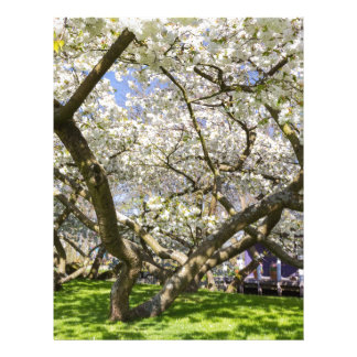 Flowering trees with white blossom in spring letterhead