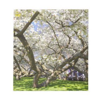 Flowering trees with white blossom in spring notepad