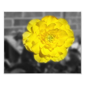 FlowerIV - Yellow Flower On Grey Background Photo Print