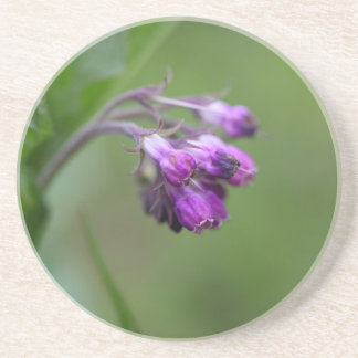 Flowers and blossoms of common comfrey coasters