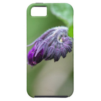 Flowers and blossoms of common comfrey iPhone 5 cases