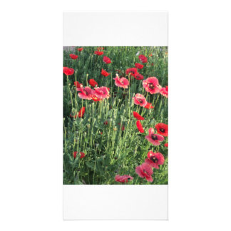 Flowers and Honey Bees Photo Card Template