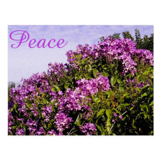 Flowers and Peace Postcard