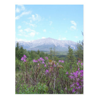Flowers and the Mountain Postcard