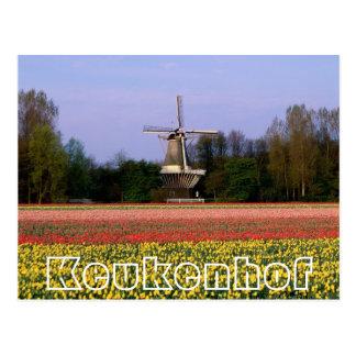Flowers at  Keukenhof, winmill and bulbfields Postcard