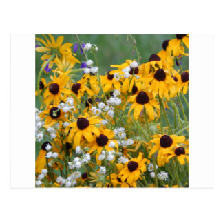 Flowers Black eyed susan's Postcard