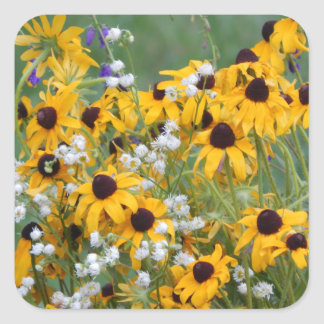Flowers Black eyed susan's Square Sticker