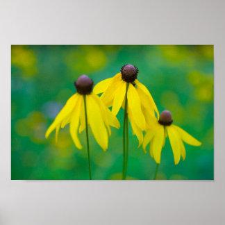 Flowers, Blendon Woods Metropark, Columbus, Ohio Poster