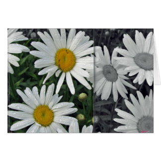 Flowers by the Lake - Daisies Card