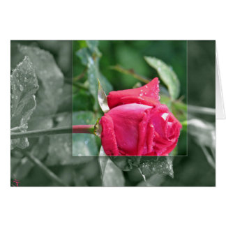 Flowers by the Lake - Red Rose Bud Card
