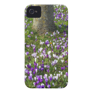 Flowers field crocuses in spring grass with tree iPhone 4 Case-Mate case