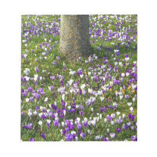 Flowers field crocuses in spring grass with tree notepad