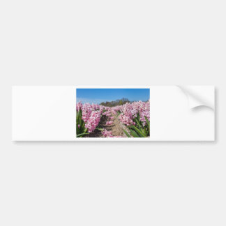 Flowers field with pink hyacinths in Holland Bumper Sticker