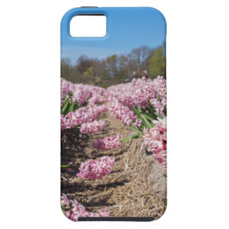 Flowers field with pink hyacinths in Holland Case For The iPhone 5