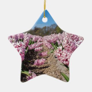 Flowers field with pink hyacinths in Holland Ceramic Star Ornament