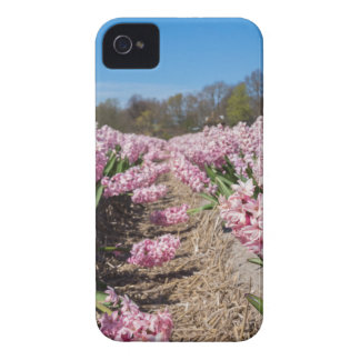 Flowers field with pink hyacinths in Holland iPhone 4 Case